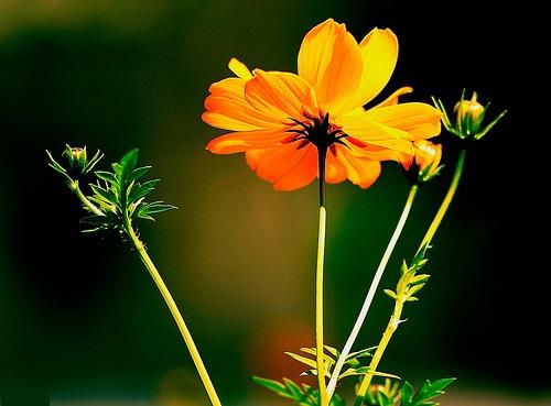 Thơ: Chờ Xuân