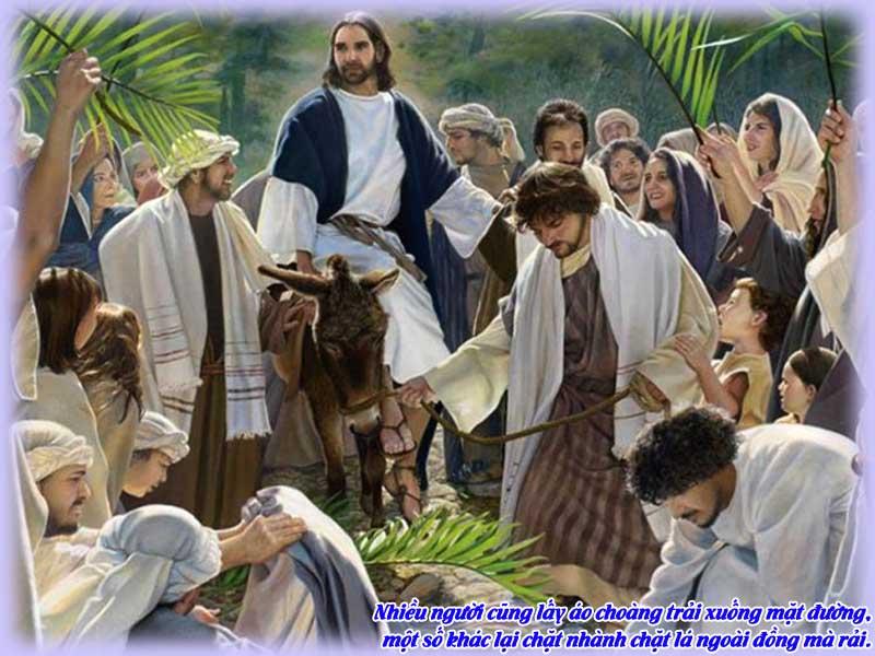 Bài chia sẻ TM CN Lễ Lá B  (L.m Vũ Phan Long)