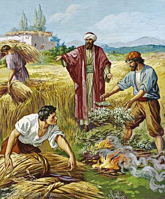 Tìm hiểu và sống Tin Mừng CN 16 Thường Niên A (Giuse Luca)