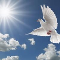 Phần 3(Bài 11): Đức Bác Ái Hay Tha Thứ